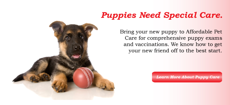 Affordable-Pet-Care-Puppy-Care